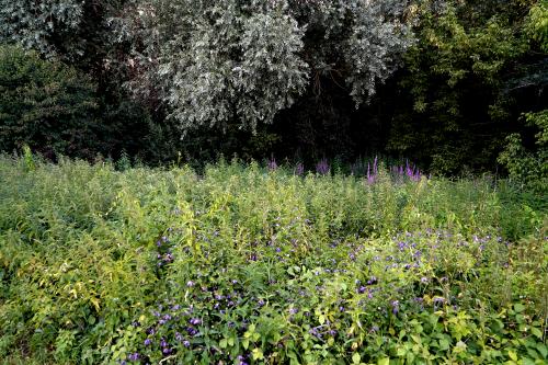 Web-Nature-2020-juillet-LaMotte-DSC01507